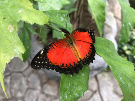 Red Butterfly Sitting on a Plant Leaf