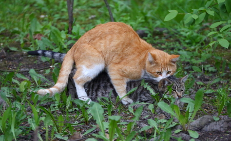 Mating a cat in green grass