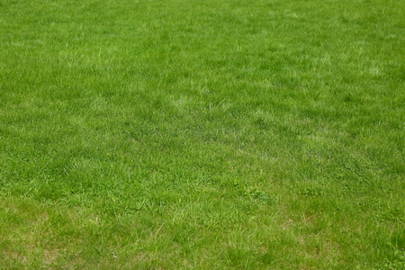 Field covered with low green grass
