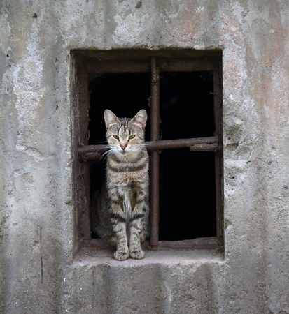 cat in basement window Stock Photo - 122849684