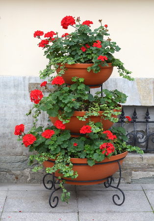 iered portable flowerbed with red flowers