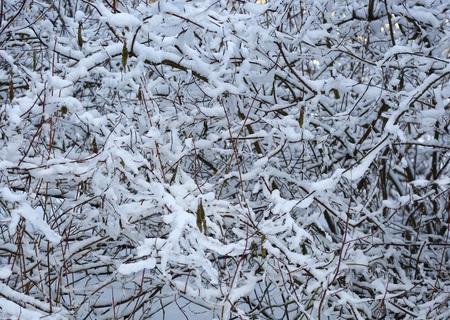 The branch under snow