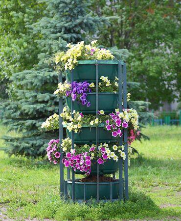 Flower bed in the summer Stok Fotoğraf