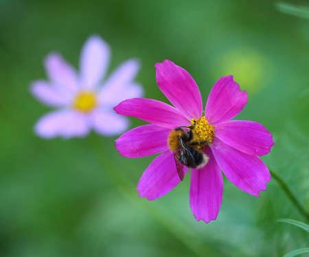 A bee sits on a purple flower Banco de Imagens