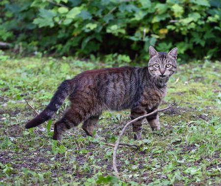 Gray cat in the green grass Banco de Imagens - 153292101