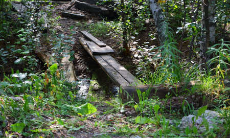 A makeshift plank bridge over a shallow ditch in the woods Banco de Imagens - 153517019