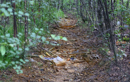 A dry drainage ditch filled with debris in the forest Banco de Imagens - 153575334
