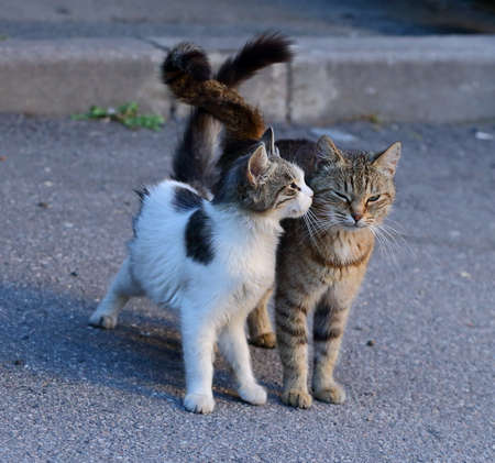 Two cats on the pavement with their tails crossed Banco de Imagens - 153748243