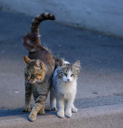 Two cats on the pavement with their tails crossed Banco de Imagens - 153748457