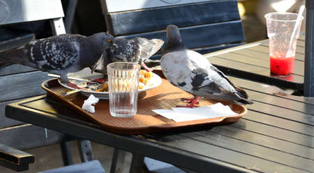 Pigeons eat leftovers on a table in an outdoor cafe Banco de Imagens - 153864316