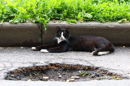 A black-and-white cat is lying on a potholed road at the curb Banco de Imagens - 153964125