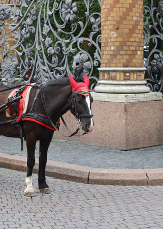 Bay horse on the pavement at the old openwork fence, Griboyedov canal embankment, Saint Petersburg, Russia, August 2020