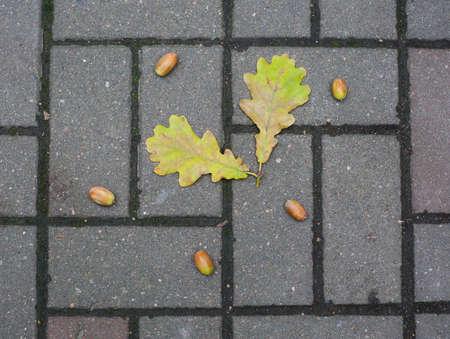 Autumn fallen oak leaves and acorns on gray paving stones Banco de Imagens