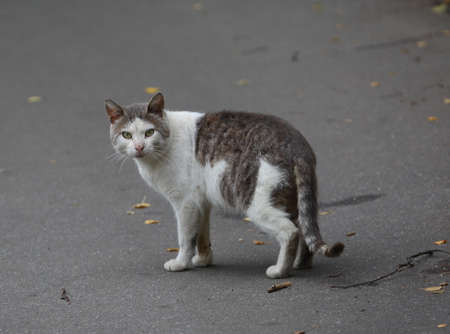 Gray and white cat on the pavement