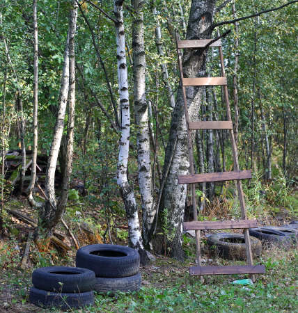 A makeshift wooden staircase is leaning against a tree in the forest
