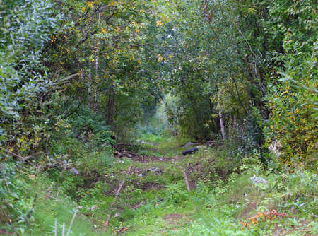 Old abandoned railway in the forest