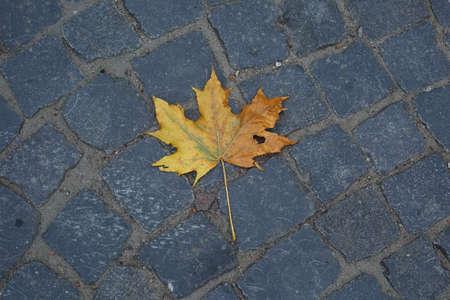 Dry yellow maple leaf on paving stones