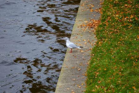 Seagull on the autumn river embankment Banco de Imagens