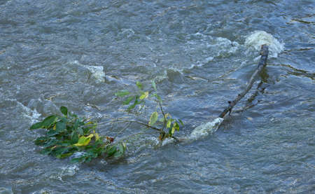 A broken tree branch with leaves floats in the swirling water Banco de Imagens