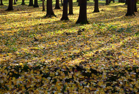 The edge of the autumn deciduous forest