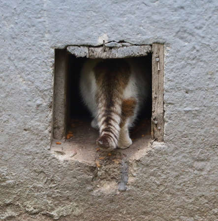 A cat with a striped tail escapes into a square hole in a gray wall