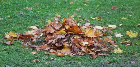 A small pile of fallen autumn leaves on the green grass