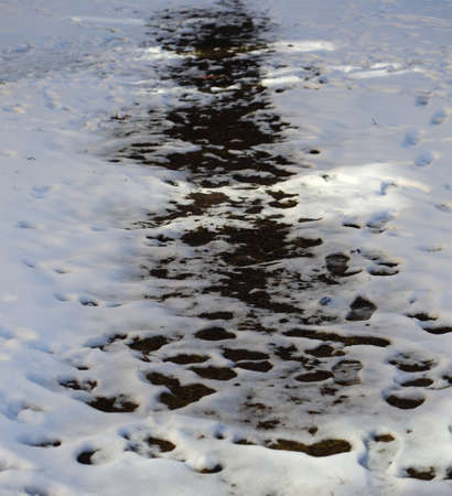 Spring thawing with black soil in white snow