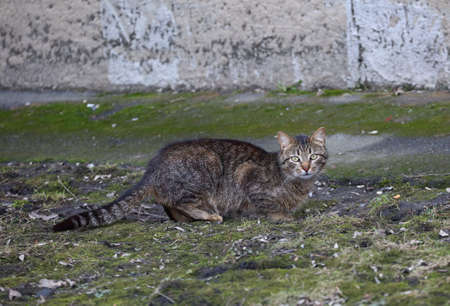 A gray tabby cat crouches on the ground