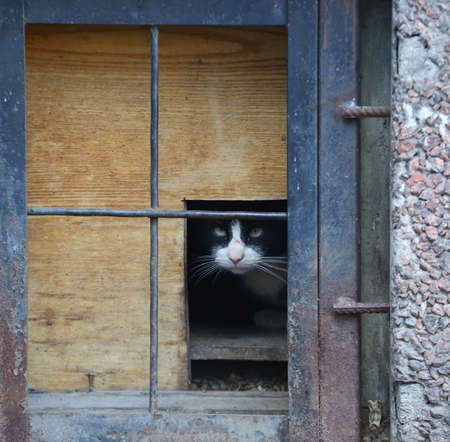 A black and white cat looks out of a basement window