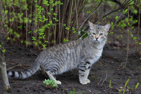 Gray tabby cat on spring land among green plants Banco de Imagens