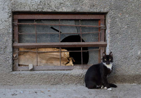 A black and white cat sits at a basement window with broken glass Banco de Imagens