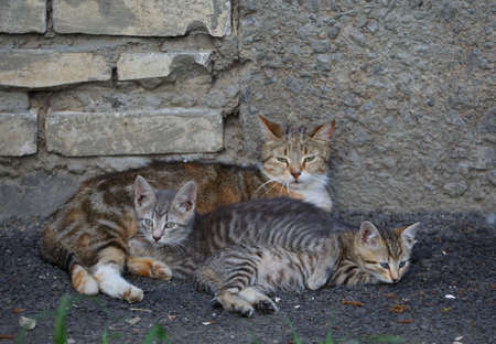 A cat with two striped kittens lies against the wall of the house Banco de Imagens