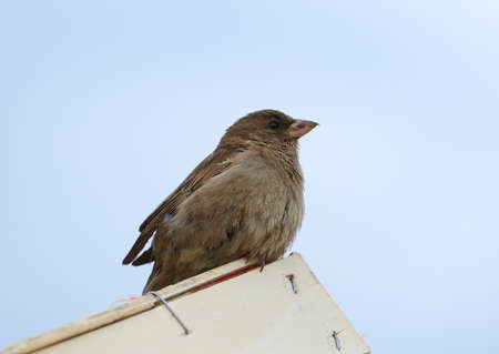A sparrow sits on the corner of a wooden box