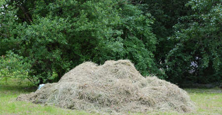 A pile of mown dry grass on the lawn Banco de Imagens