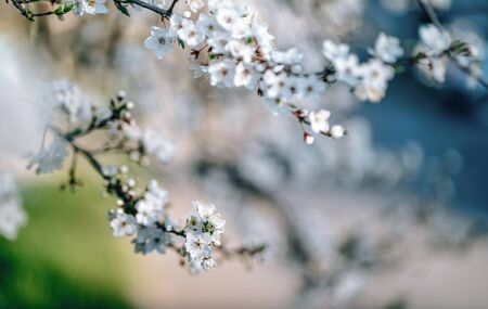 Photo of closeup blossoming tree in forest or park. Beautiful nature background