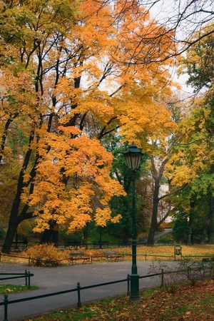 colorful lantern: Autumn landscape with colorful lantern. Planty in Krakow.