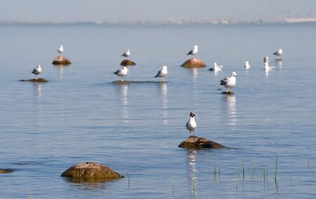 Seagulls sitting on the rocks in the sea and bask in the sun Stock Photo - 17756898