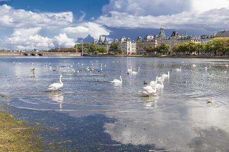 Swans and ducks on the lake student in Copenhagen  Denmark photo