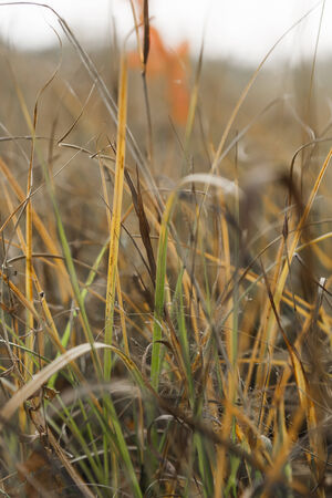 A fragment of the autumn field with multi-colored stems of grass