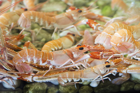 Shrimps and crabs in the aquarium photo