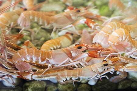 amano: Shrimps and crabs in the aquarium Stock Photo