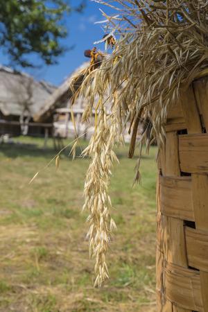 Spikelets barley standing in a large wicker basket