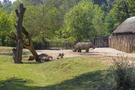 Pull-push, twee neushoorns op een klein platform voor de bungalow