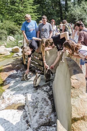 ZLIN, CZECH REPUBLIC - AUGUST 14, 2017: People on a hot, sunny day watch the penguins, communicate with them, stroke them in the enclosure of the Zl�n Zoo. Zl�n. Czech Republic