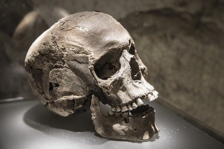An archaeological find in the form of a fragment of human remains - the human skull