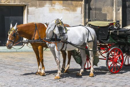 Two horses, one white and one pinto, stand on the pavement, harnessed to a cart on a bright sunny day