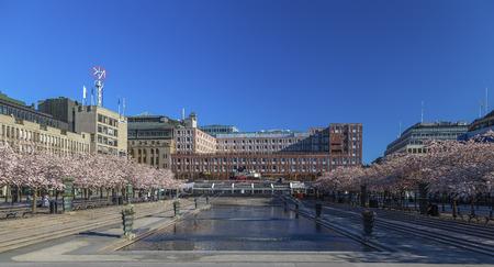 Stockholm, Sweden - May 01, 2017: Sakura blossoms in the Royal Garden