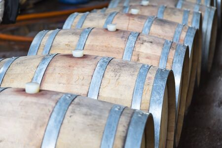 Oak barrels with red wine lie on a rack in one row barrel to barrel