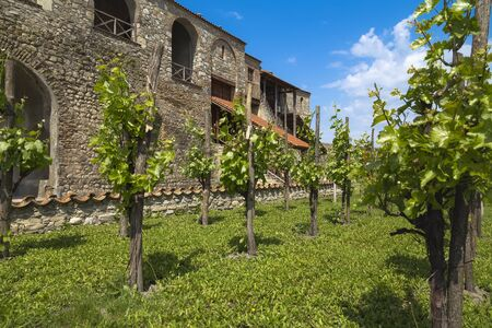 The cozy courtyard of one of the monasteries of Georgia with growing vines in the foreground and a blue sky in the background