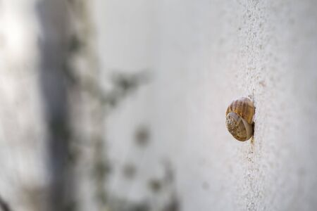 Little snail stubbornly scrambles up a sheer shabby wall